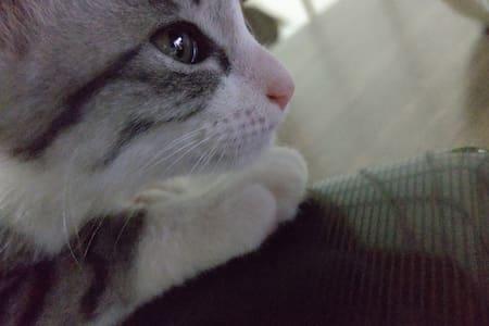ゲストハウス屋島 1-3 昭和な家でネコと遊んでください^^  屋島寺と八栗寺の近く