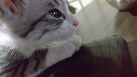 guesthouse_yashima 1-3  (Cats in old Japan house)