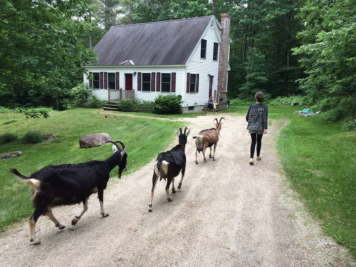 Great Goat Get-away in Southern Maine!