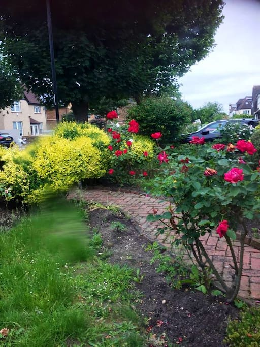 Section of Front Garden