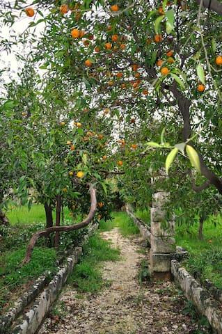 Masseria dei limoni - app.3