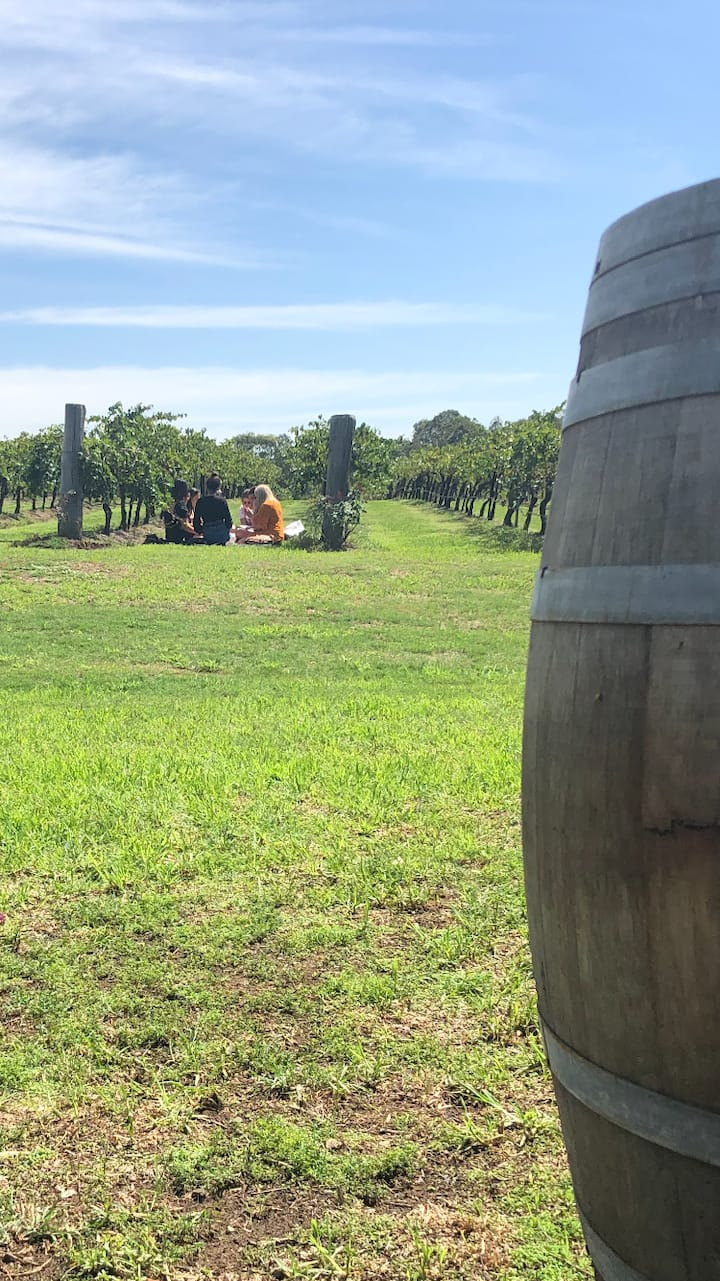 Picnic in the vines