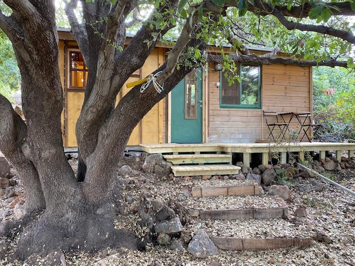 The wooden cabin under the Oak tree