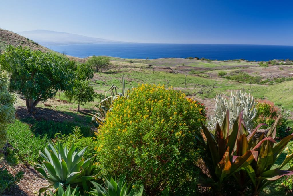 Garden, ocean and Hualalai volcano from your lanai