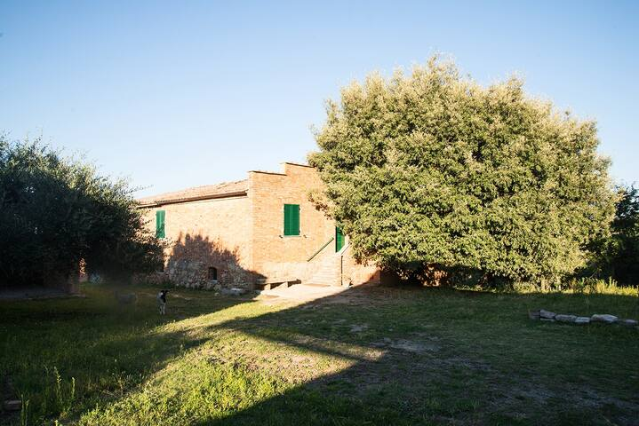 Rooms in farmhouse in the green with animals - Provincia di Siena - House