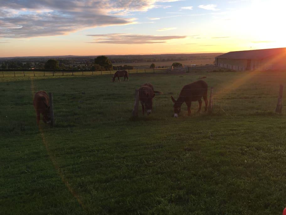 Un couple d'ânes et leur petit