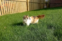 Nala exploring our garden!