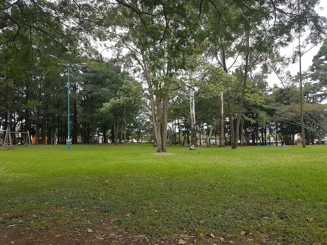 El Bosque Park only 200 meter from place. Ideal for a walk or just relax!