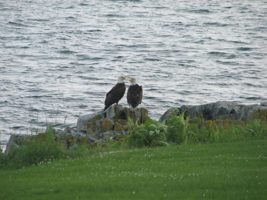 Wildlife at Ocean's Edge