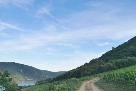 Ferienwohnung Rheinpanorama