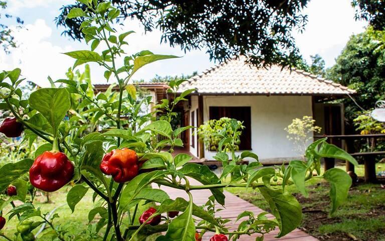 Pousada Natureza Viva - Ribeirinha - Itacaré/BA