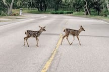 Kids in the neighborhood - be cautious on the roads