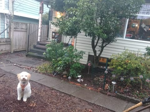 Room in N Seattle 115-yr-old family home w/pets