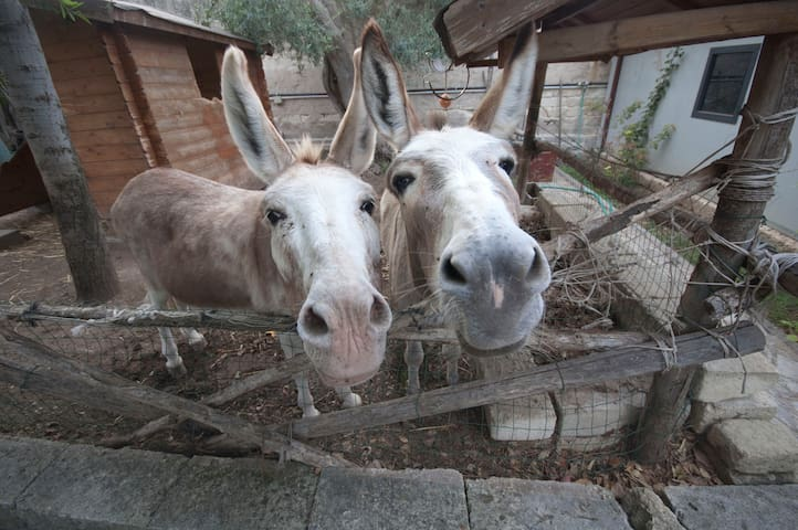 THE DONKEYS VILLA