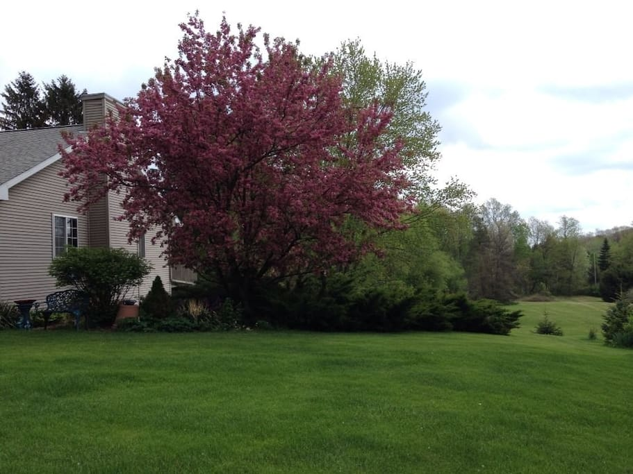 Our flowering trees on the left side of our home.