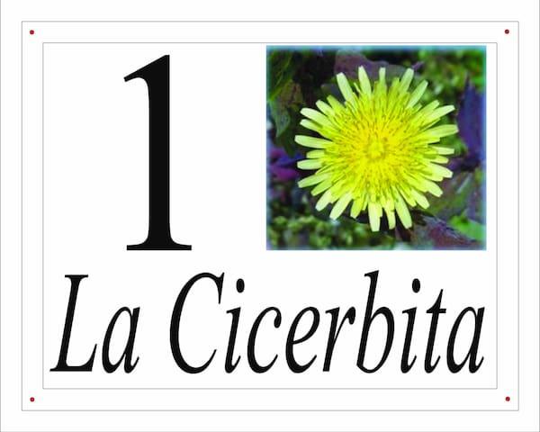 I fiori del Pollino - La Cicerbita