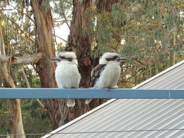 Arthurs Seat Rd. B&B - where the Kookaburras dine - Arthurs Seat