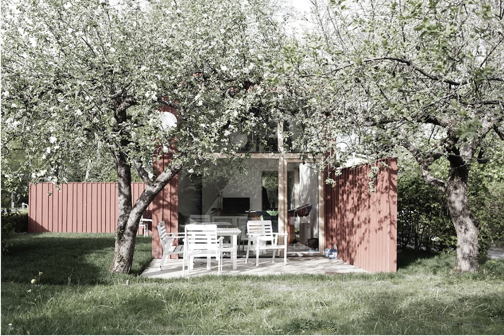 Patio under the apple trees.
