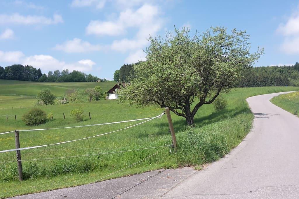 Der Wanderweg vor dem Haus in Richtung der Burg