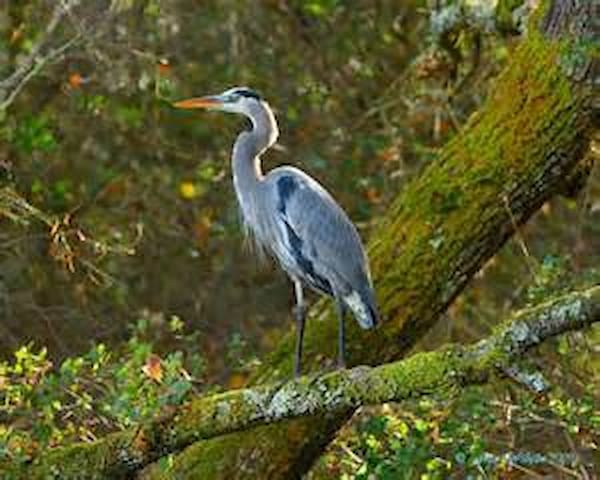 Blue Heron Retreat