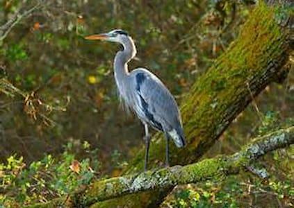 Blue Heron Retreat