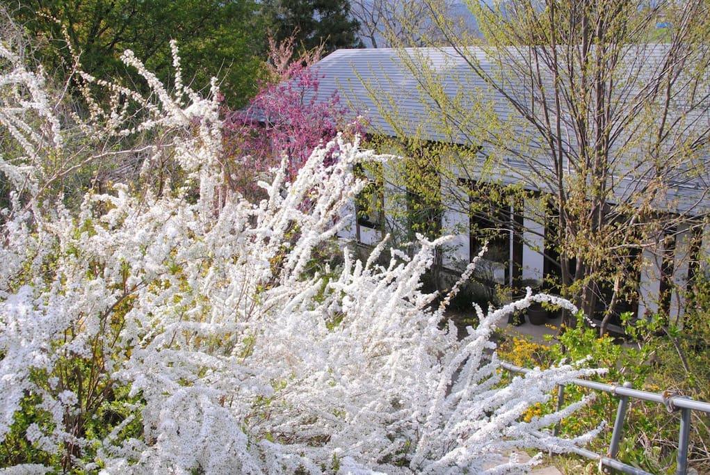 春は庭が花で埋め尽くされます。