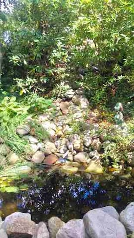Closeup view of pond