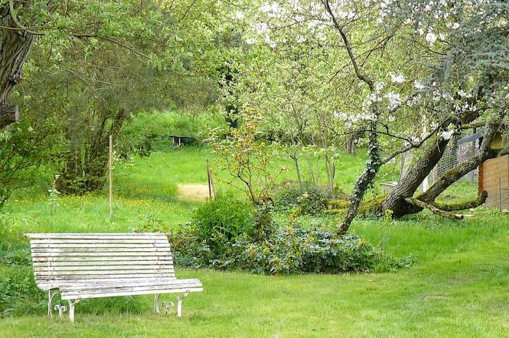 Un jardin arboré,