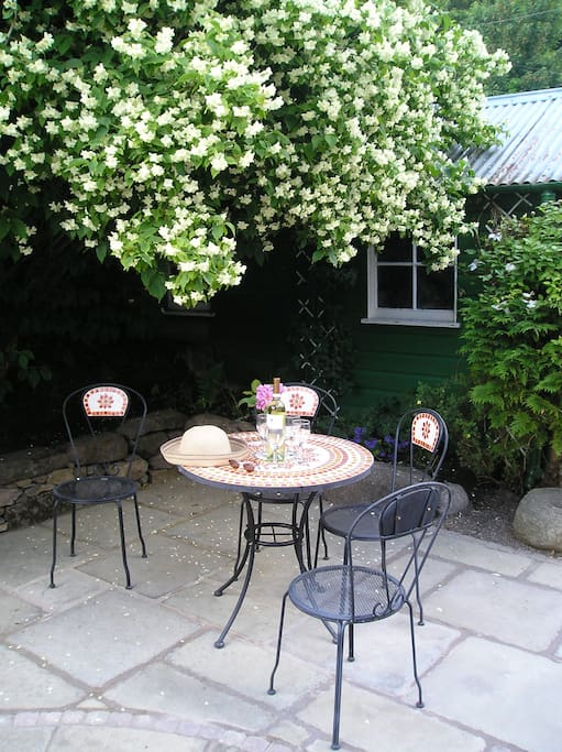 Time for a quiet drink under the philadelphus in June