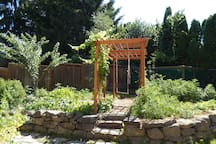 Backyard grape arbor, plum tree and garden patch