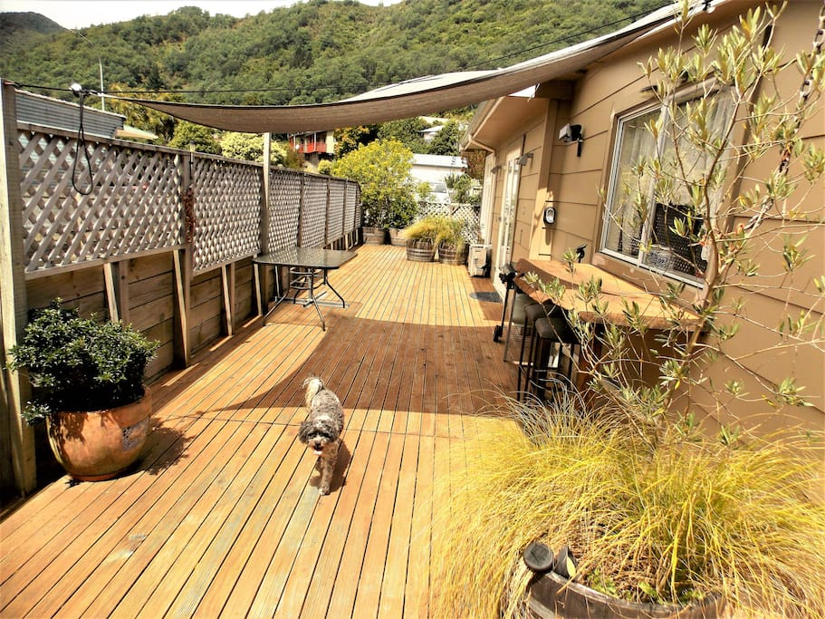 deck (does not come with dog)