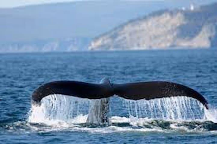 Les baleines que l'on peut observer depuis les sentiers du parc Forillon ou en excursion à Grand-Grave depuis l'entrée sud du parc.