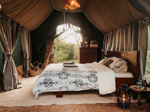 ACACIA GROVE   The Right Inn-Tent