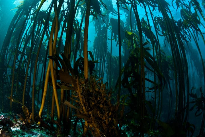 The mystical kelp forest awaits...