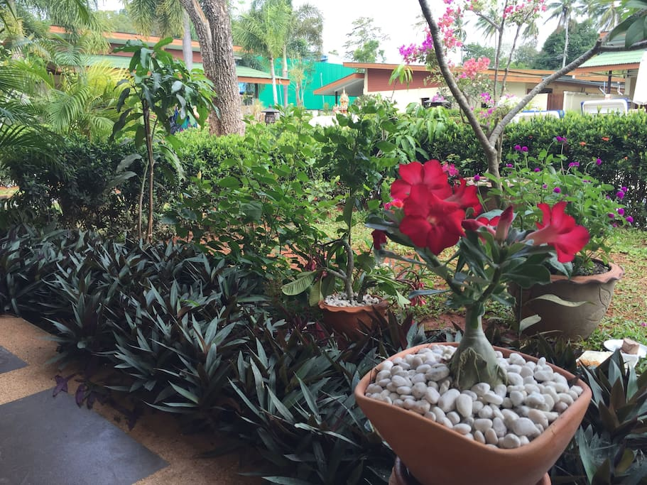 the nice garden with tropical plants and flowers