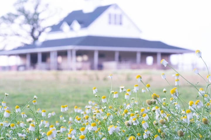 Alpaca Farm and Gardens  Suite