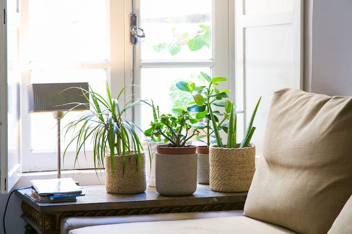 Plants in Window, living room