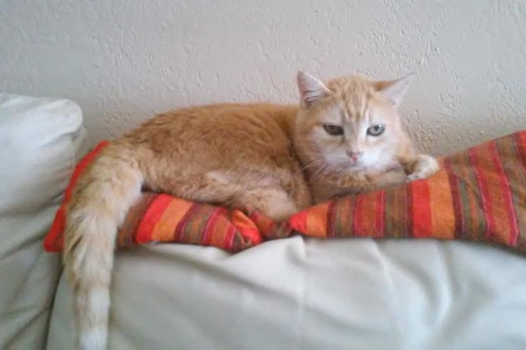 My Mitzy, age 21 in 2017! She has some arthritis but otherwise, her health is excellent.  The guest bedroom is kept closed and is off limits to my pets.