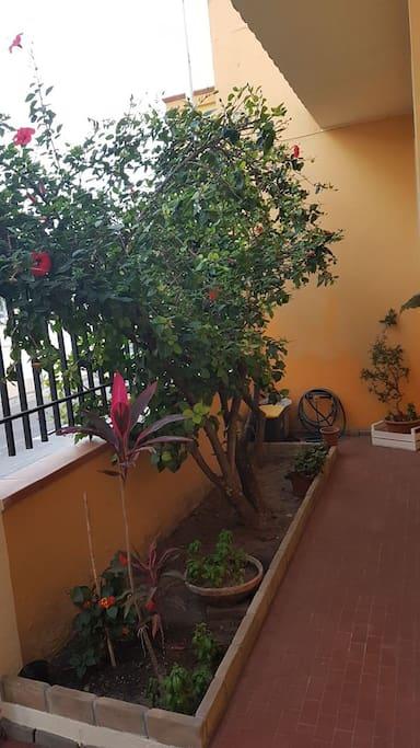 L'Hibiscus rosso davanti alla casa che da sempre la caratterizza