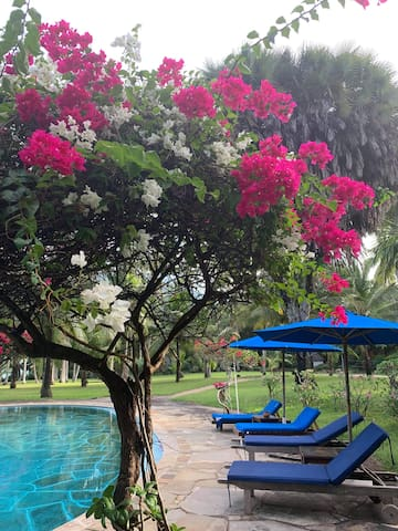 Nice flowers by the pool
