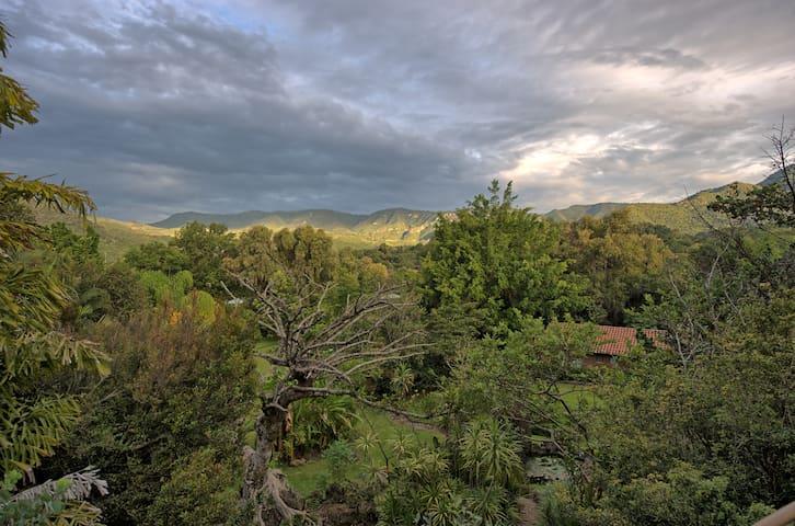 Vista de la palapa - Casa Raíz