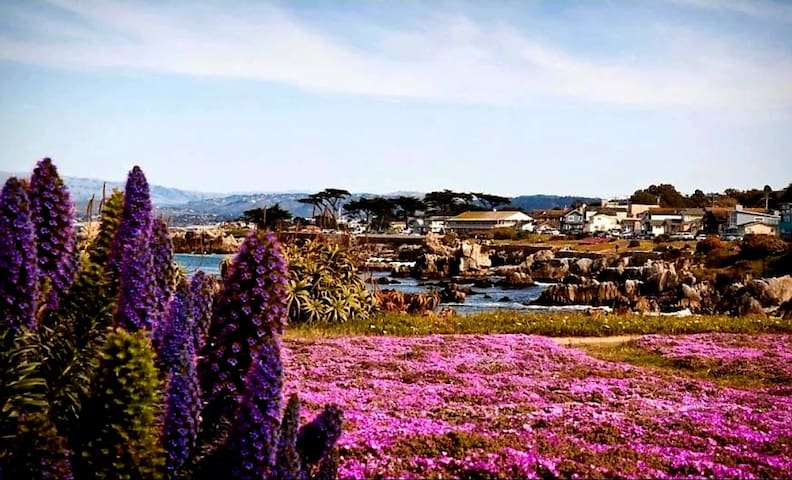 Pacific Grove, 5 miles from the house