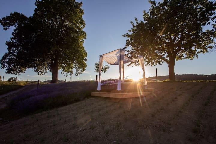 Übernachten im Lavendelfeld