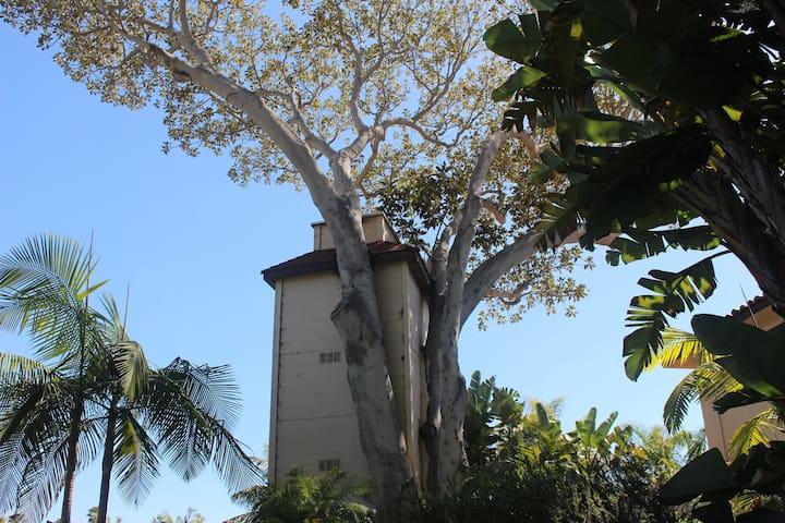 Magical Ocean View Tree House