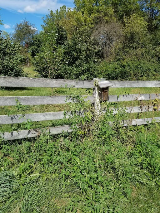 Historic Fence Lines