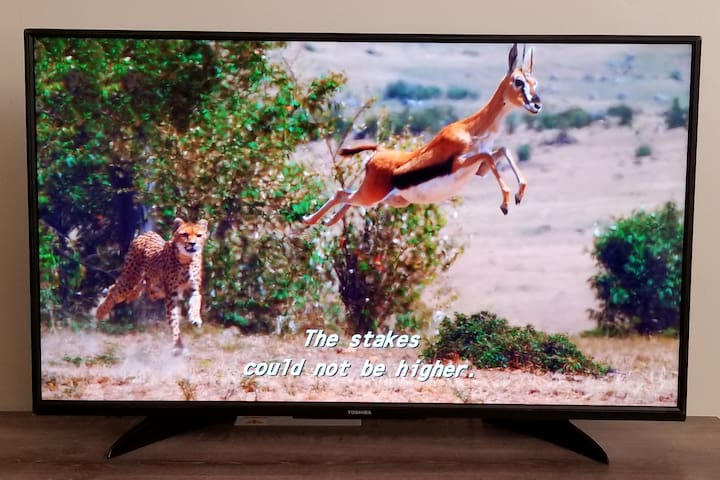 Netflix animal channel