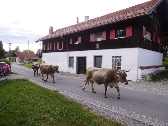 Idyllic homestead - Bachtelblick