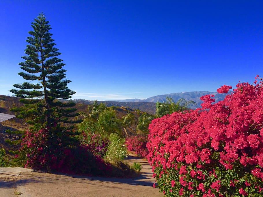 Beautiful views around the Rancho del Sol.