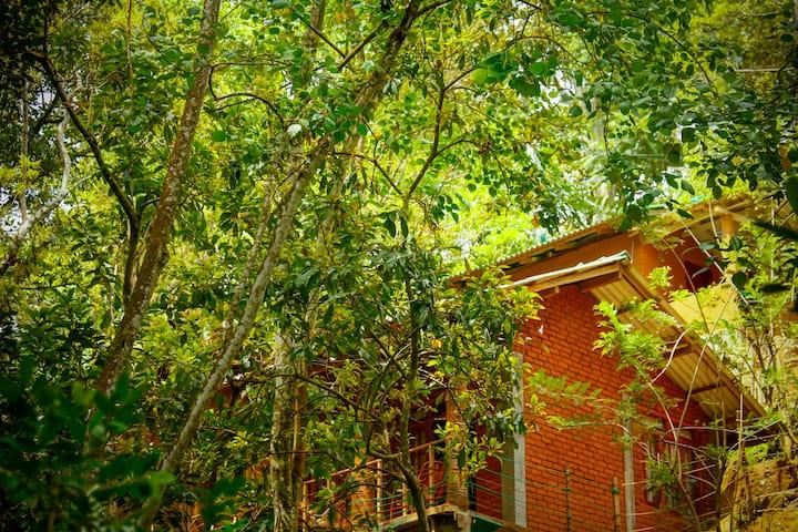 Ella green Forest cottages