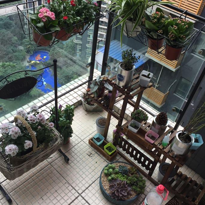 25楼独立阳台.如果你也喜欢花定会好好爱护它